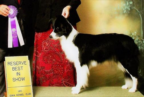 September 20, 2014: Taxi Best in Show at UKC show.